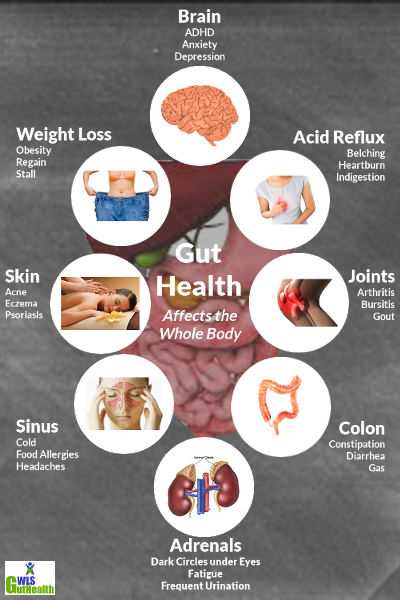WLS Gut Health Basics